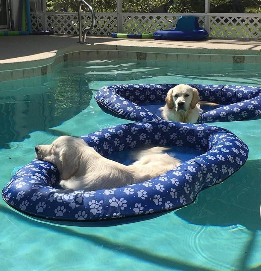 Pool Float For Your Dog - Best Pool Accessories For Your Summer Pool Party
