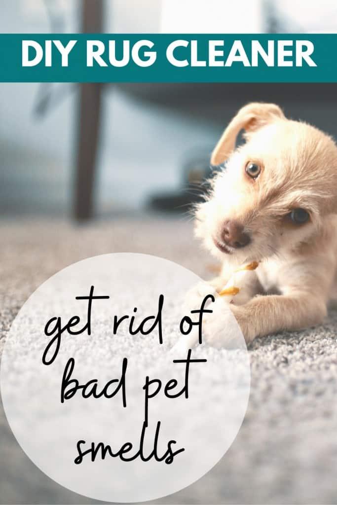 DIY Rug Cleaner - get rid of bad pet smells